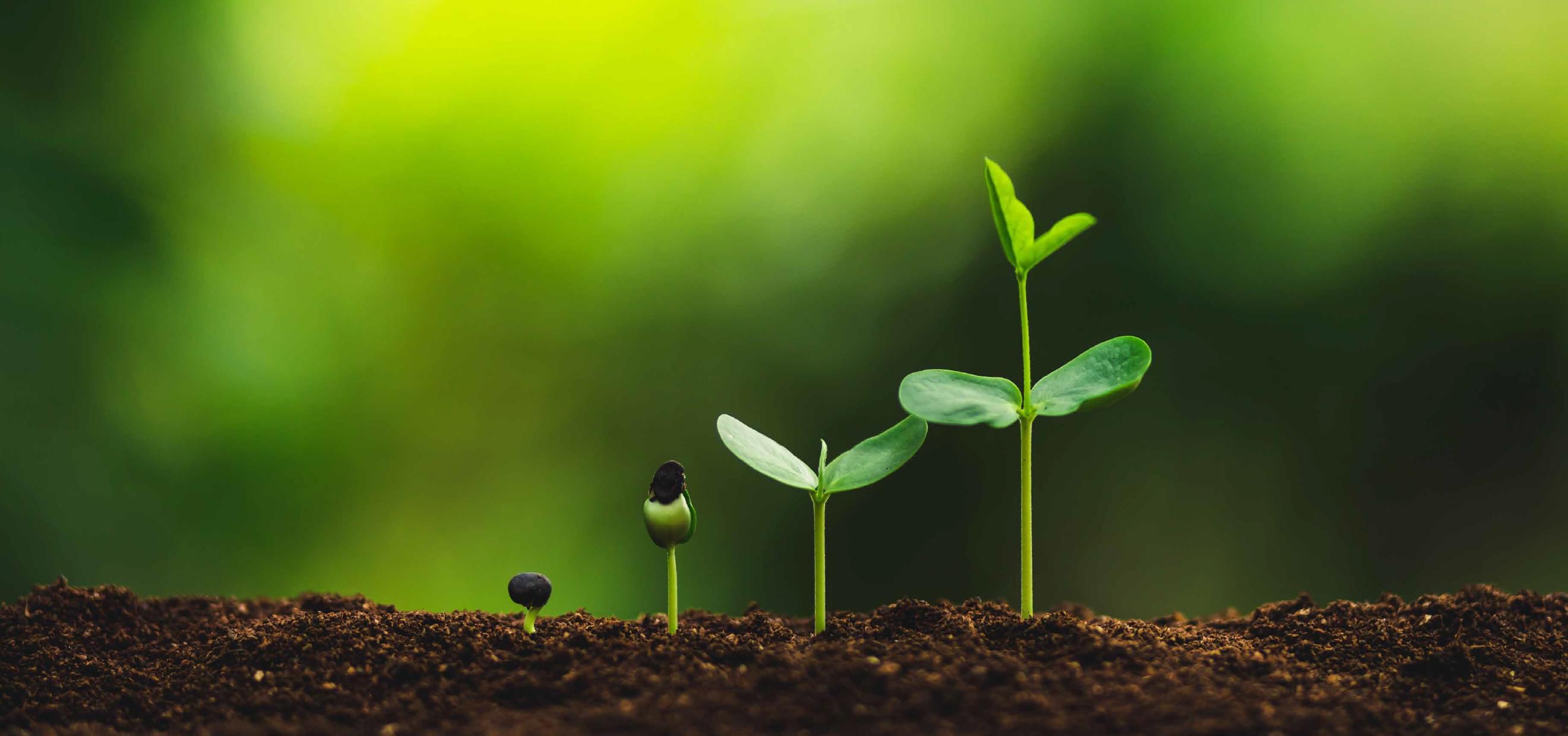 Euroterriflora, più vita alle tue piante